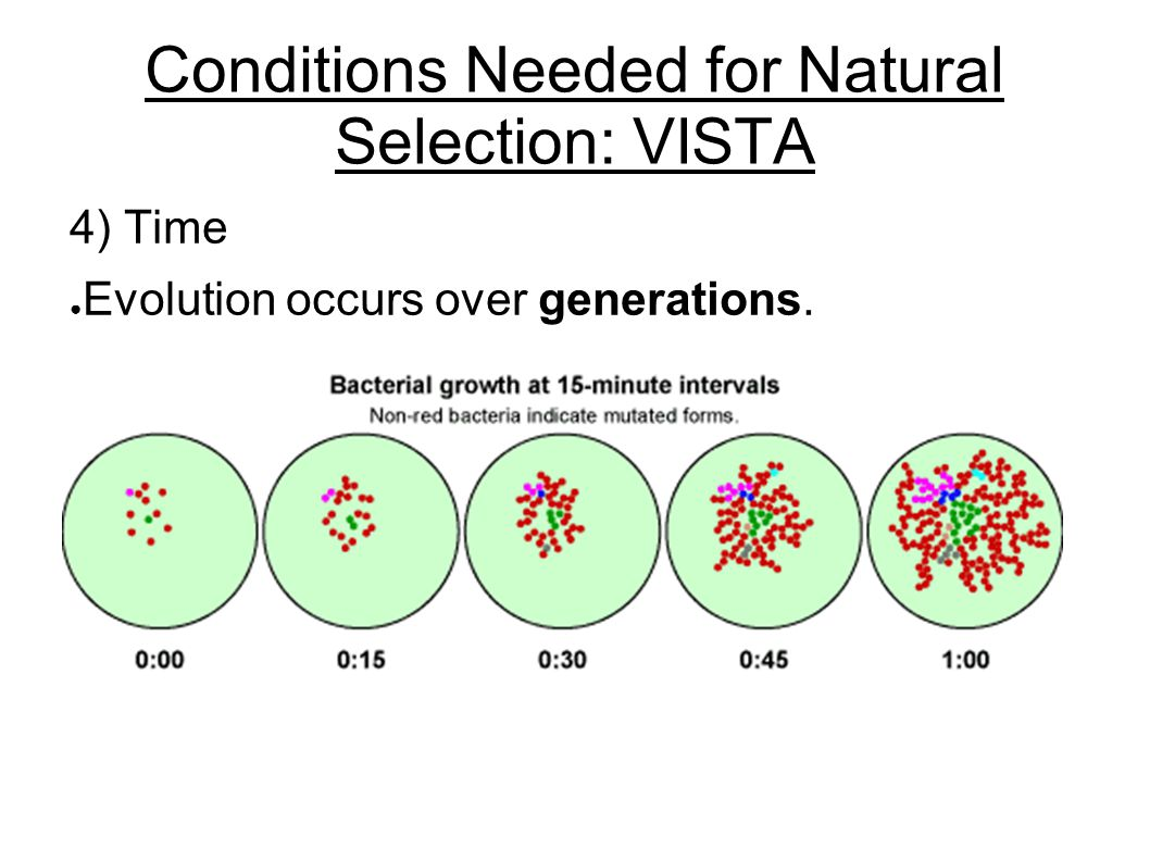 Conditions Needed for Natural Selection: VISTA