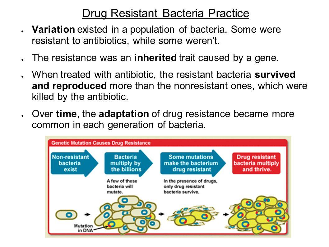 Drug Resistant Bacteria Practice