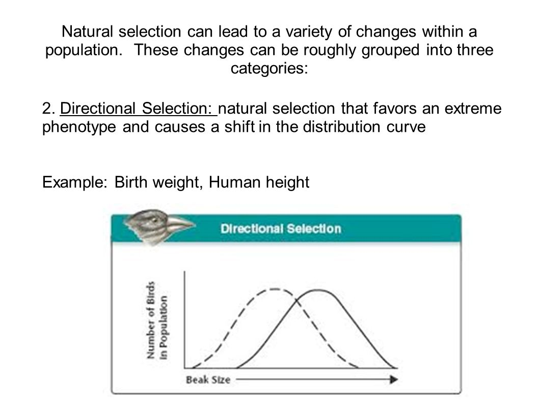 Natural selection can lead to a variety of changes within a population