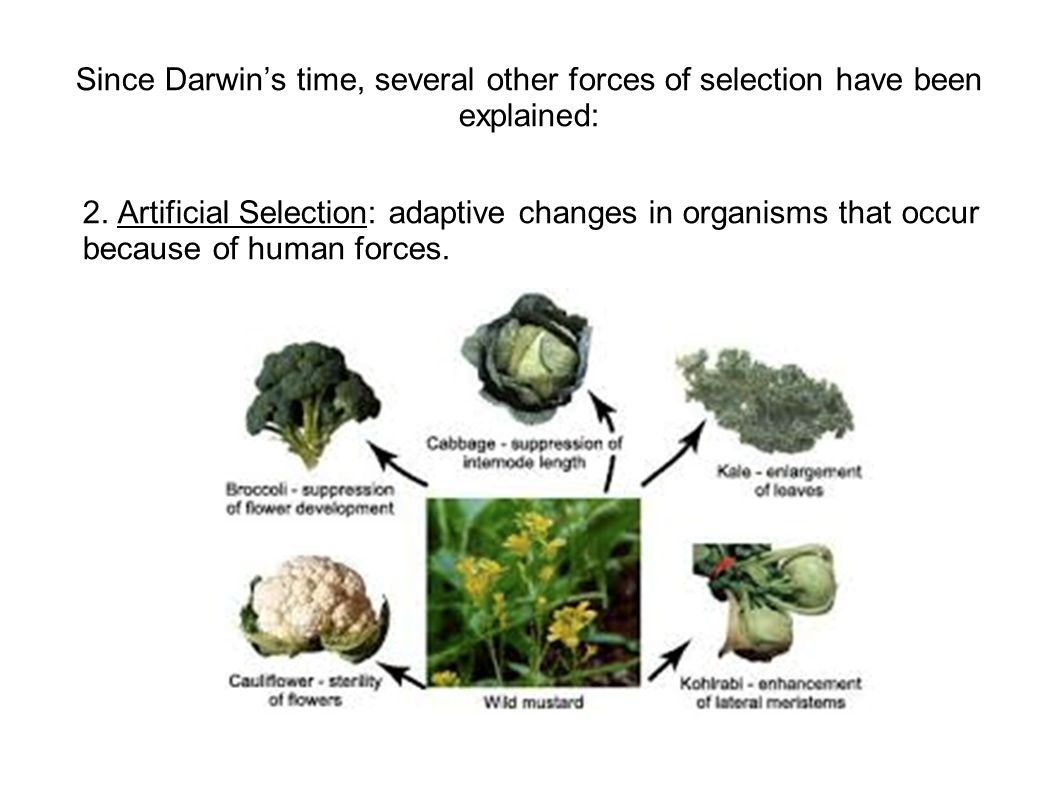 Since Darwin's time, several other forces of selection have been explained: