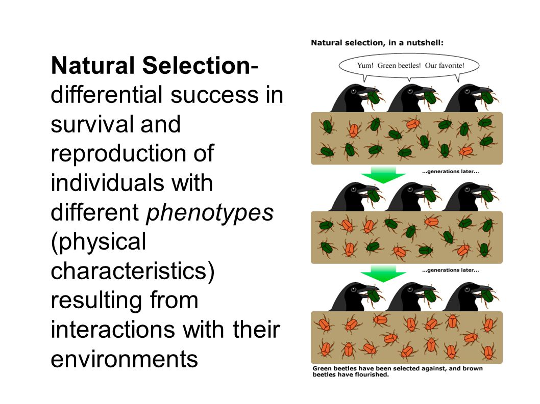 Conditions For Natural Selection Mechinism