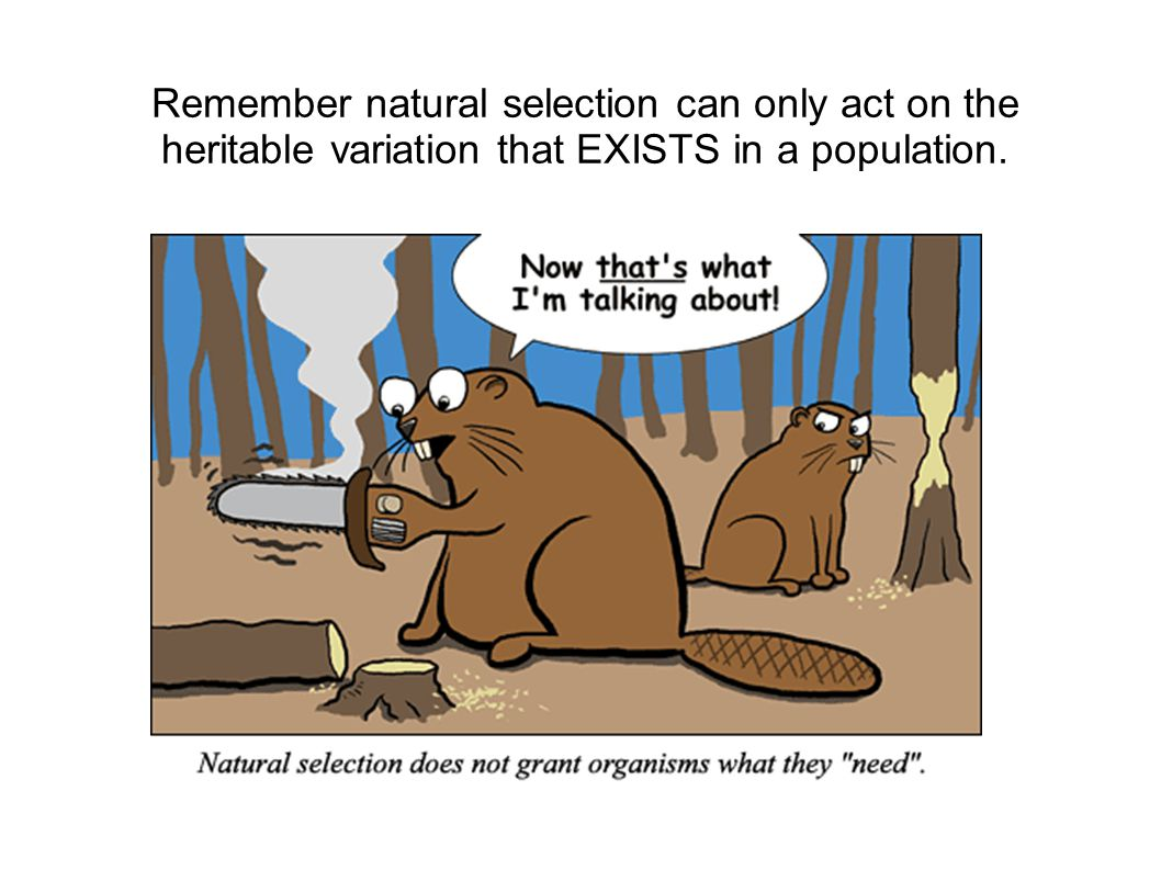 Remember natural selection can only act on the heritable variation that EXISTS in a population.