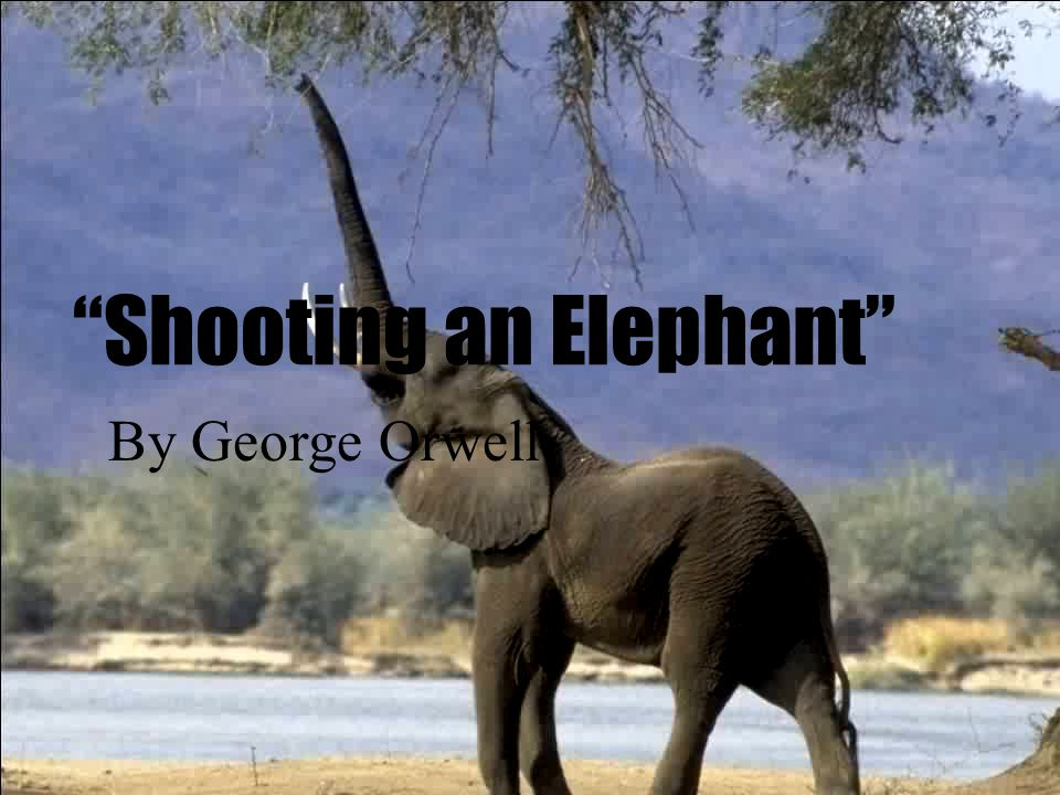 an analysis of george orwells shooting an elephant It is at this point that orwell goes on to work through the implications and factors behind shooting the elephant,  an analysis of george orwell's essay why i write.