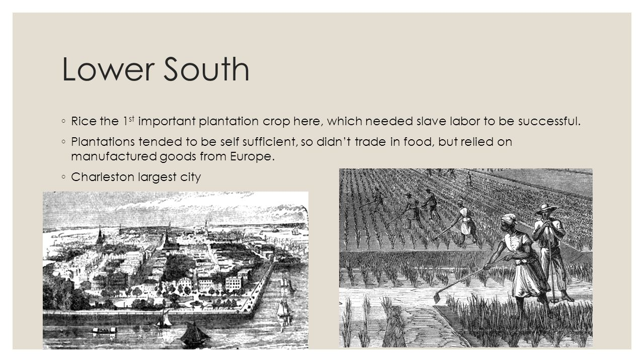 Lower South Rice the 1st important plantation crop here, which needed slave labor to be successful.