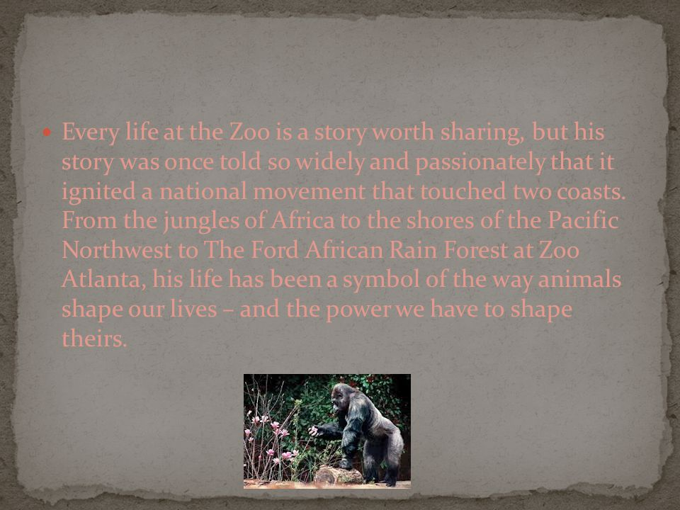 Every life at the Zoo is a story worth sharing, but his story was once told so widely and passionately that it ignited a national movement that touched two coasts.