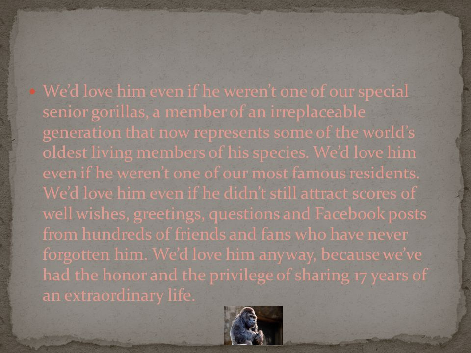 We'd love him even if he weren't one of our special senior gorillas, a member of an irreplaceable generation that now represents some of the world's oldest living members of his species.