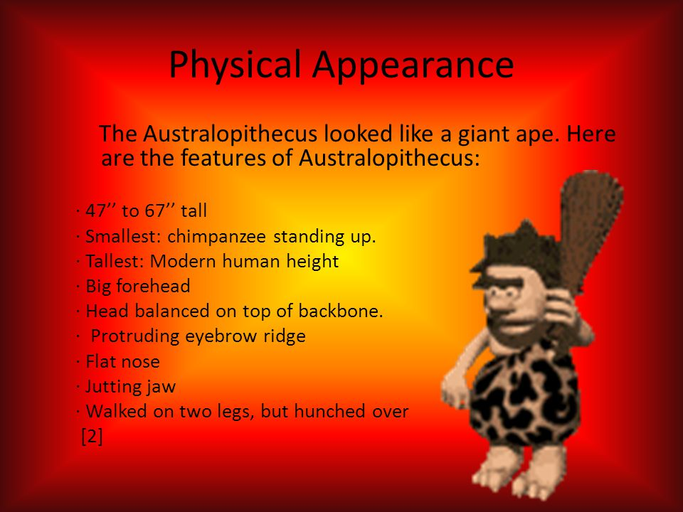 Physical Appearance The Australopithecus looked like a giant ape. Here are the features of Australopithecus:
