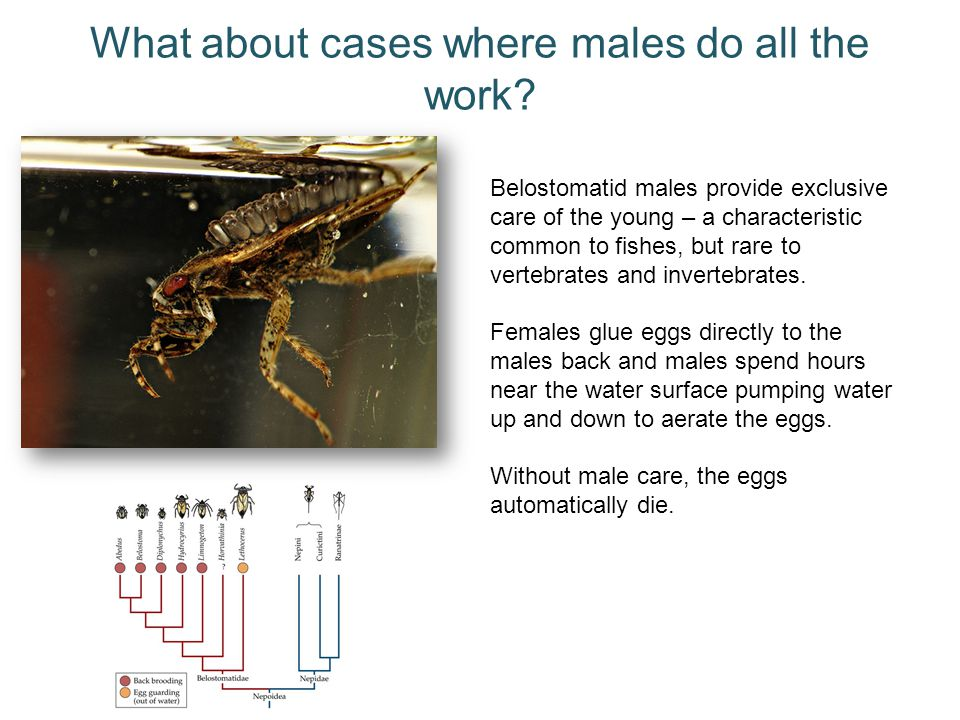 What about cases where males do all the work
