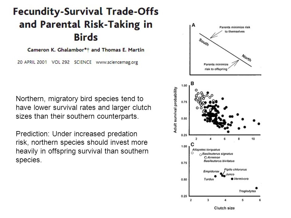 Northern, migratory bird species tend to have lower survival rates and larger clutch sizes than their southern counterparts.