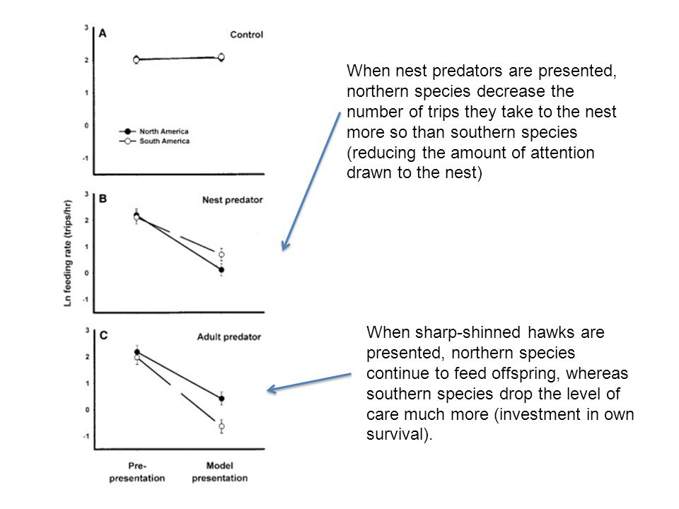 When nest predators are presented, northern species decrease the number of trips they take to the nest more so than southern species (reducing the amount of attention drawn to the nest)