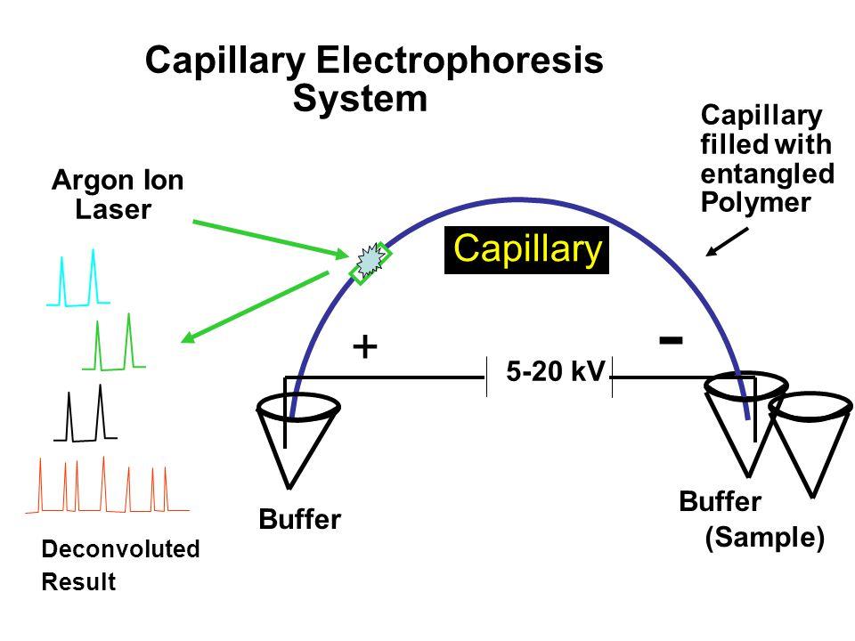 - + Capillary Electrophoresis System Capillary