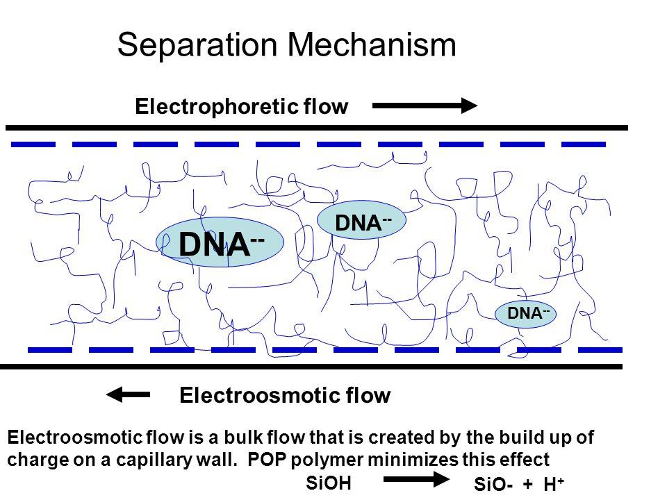 Separation Mechanism DNA-- Electrophoretic flow DNA--
