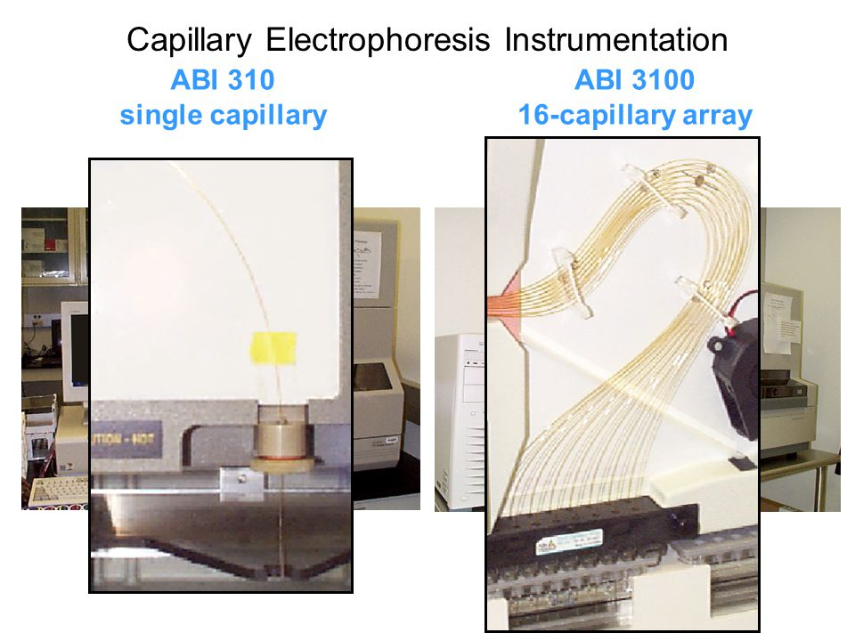 Capillary Electrophoresis Instrumentation