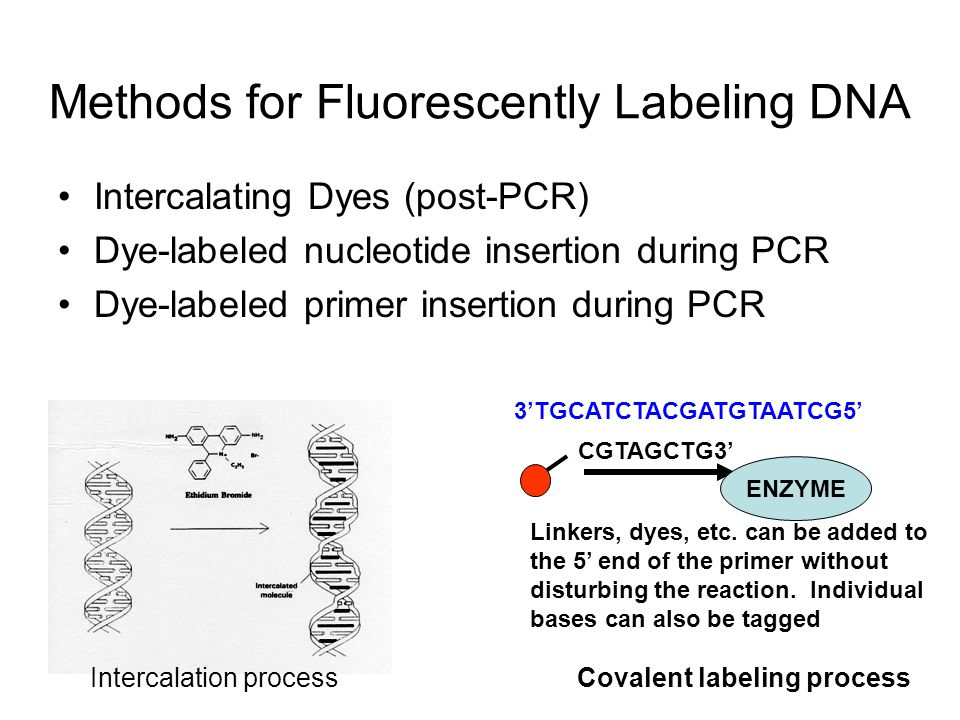 Methods for Fluorescently Labeling DNA