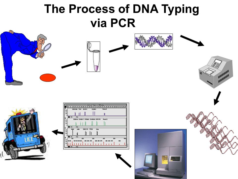 The Process of DNA Typing