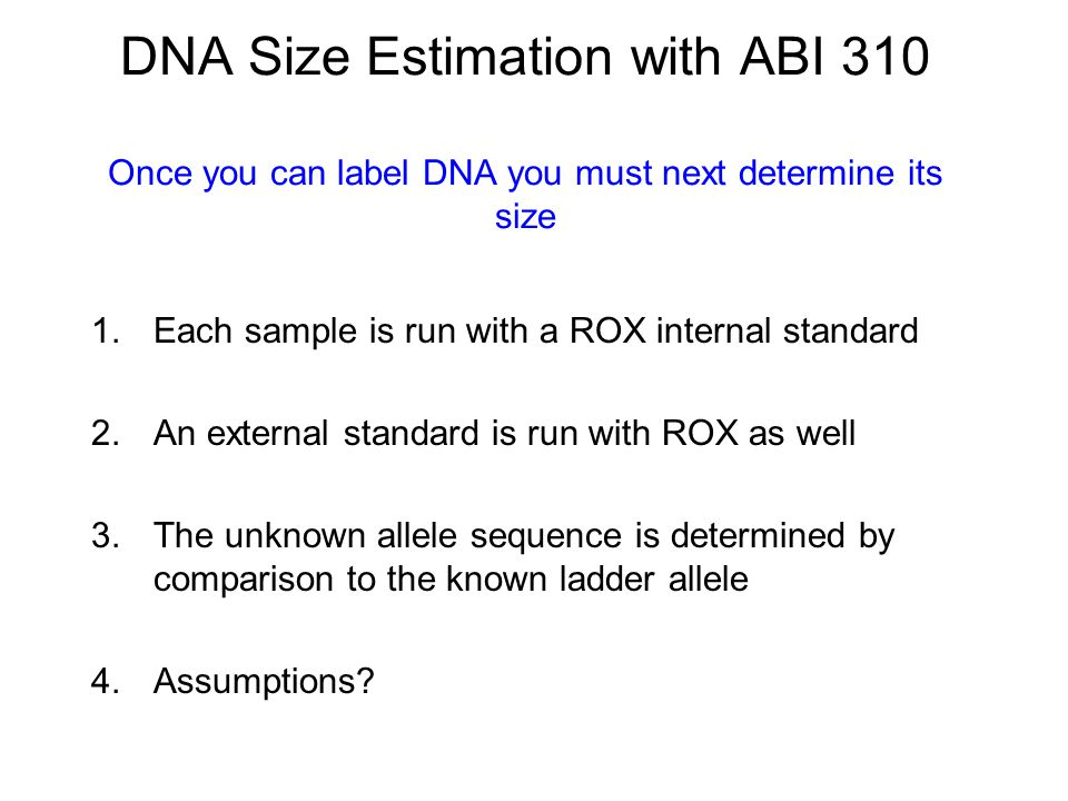 DNA Size Estimation with ABI 310 Once you can label DNA you must next determine its size