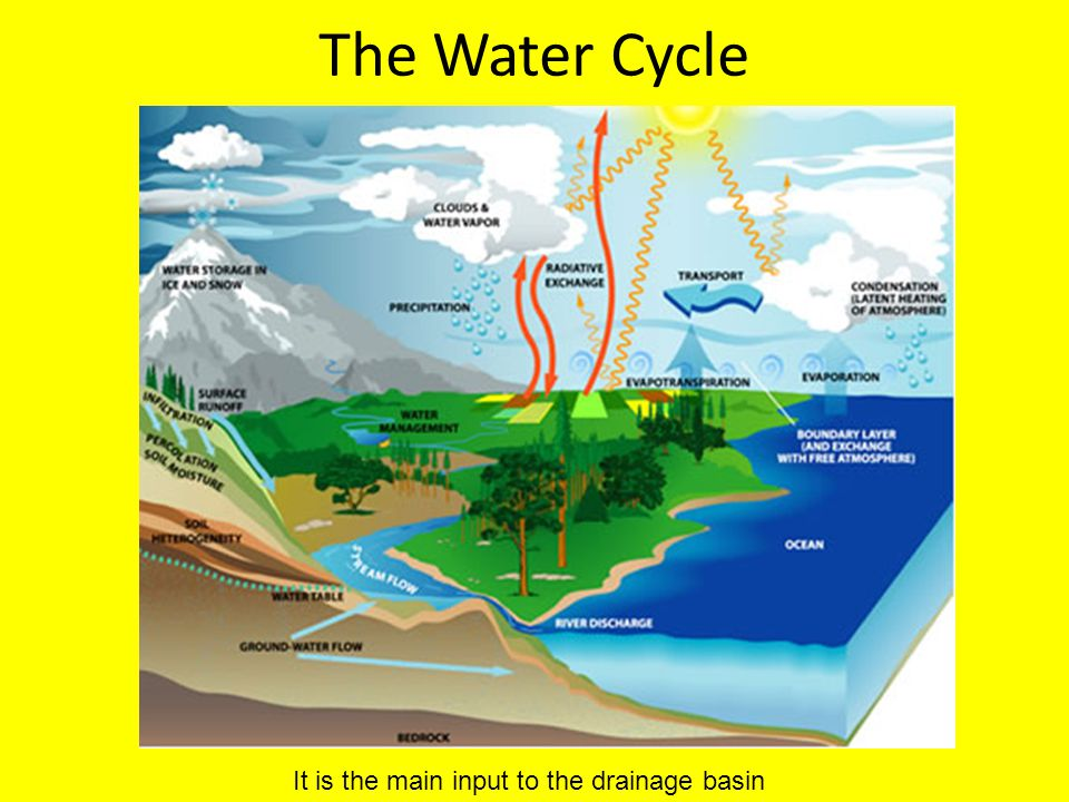 The Water Cycle It is the main input to the drainage basin