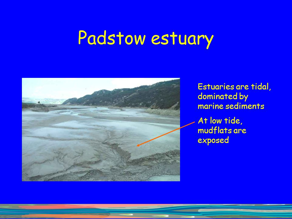 Padstow estuary Estuaries are tidal, dominated by marine sediments