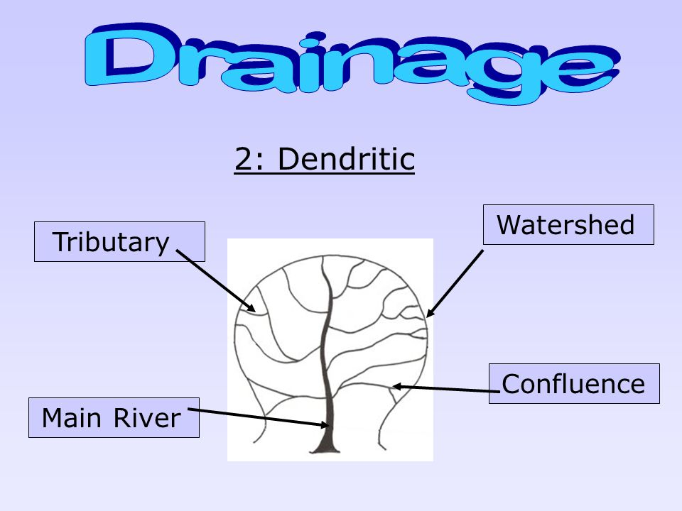 Drainage 2: Dendritic Watershed Tributary Confluence Main River