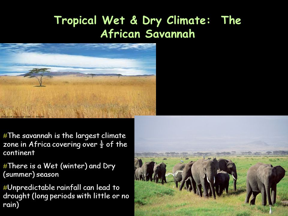 Tropical Wet & Dry Climate: The African Savannah