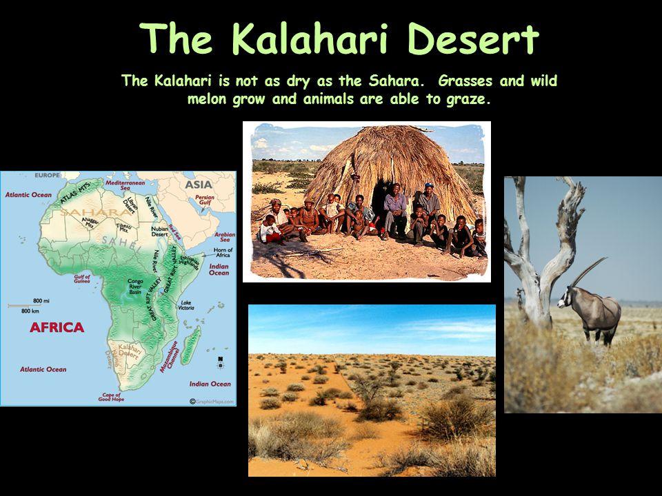 The Kalahari Desert The Kalahari is not as dry as the Sahara.
