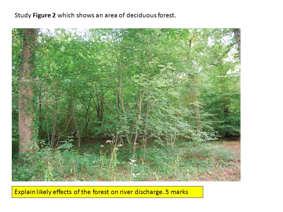 Study Figure 2 which shows an area of deciduous forest.