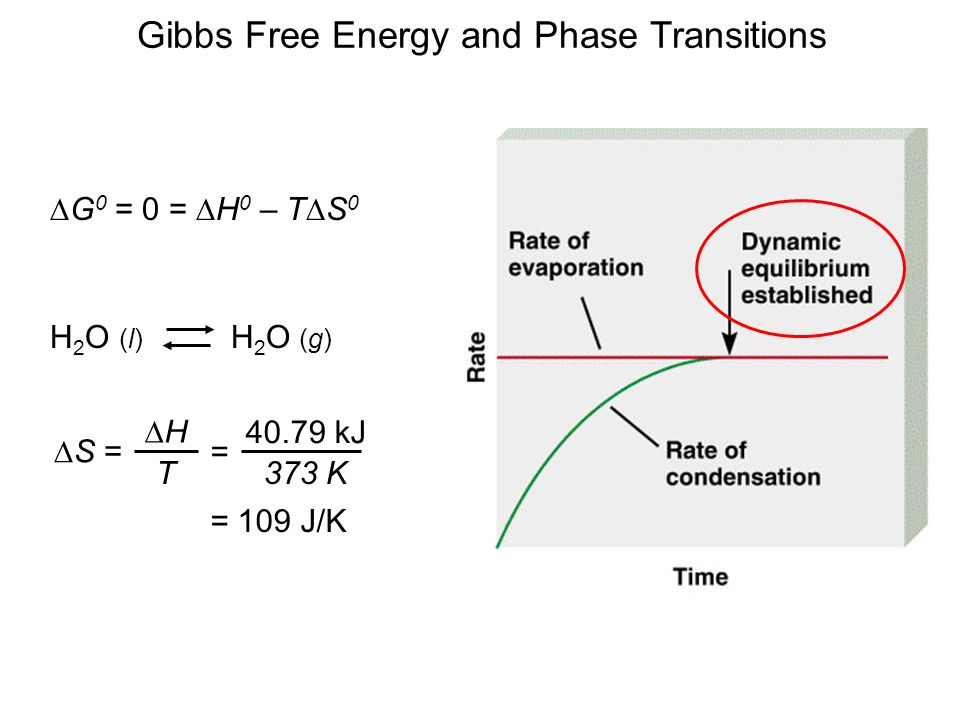 Gibbs Free Energy and Phase Transitions