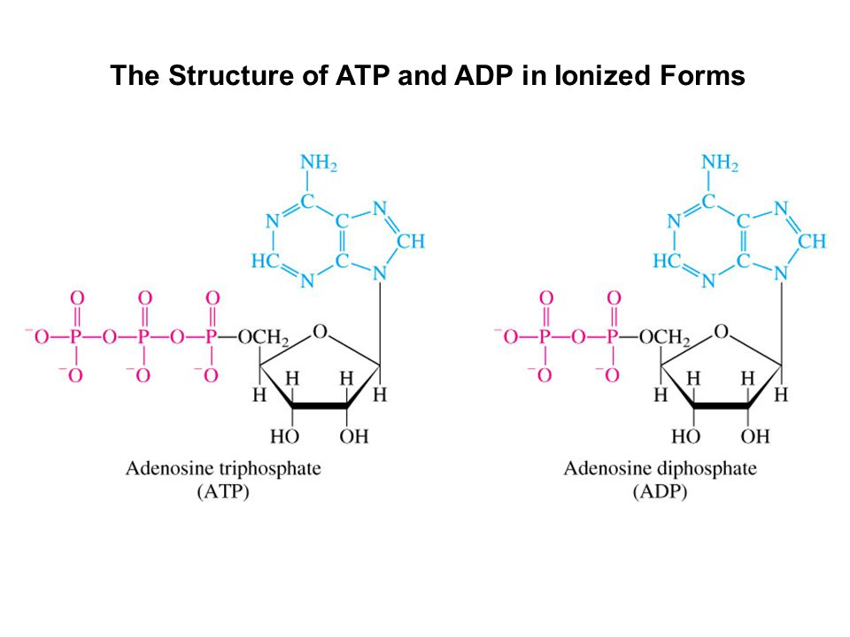 The Structure of ATP and ADP in Ionized Forms