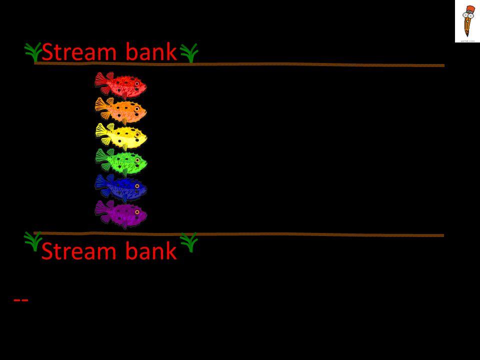Stream bank --