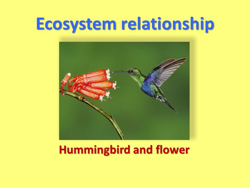 Ecosystem relationship