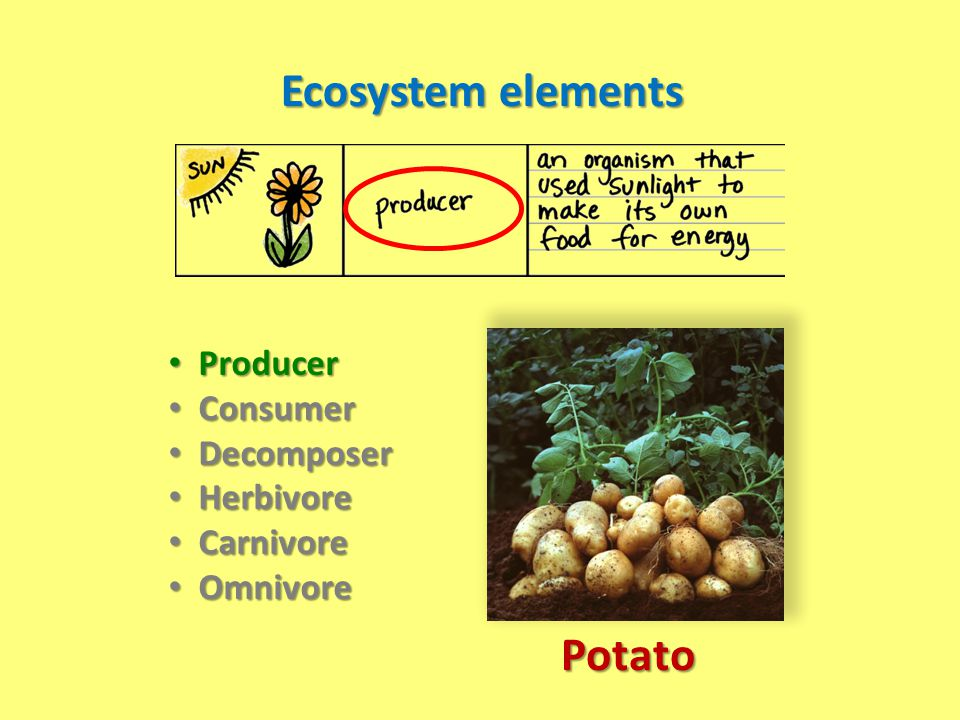 Ecosystem elements Potato