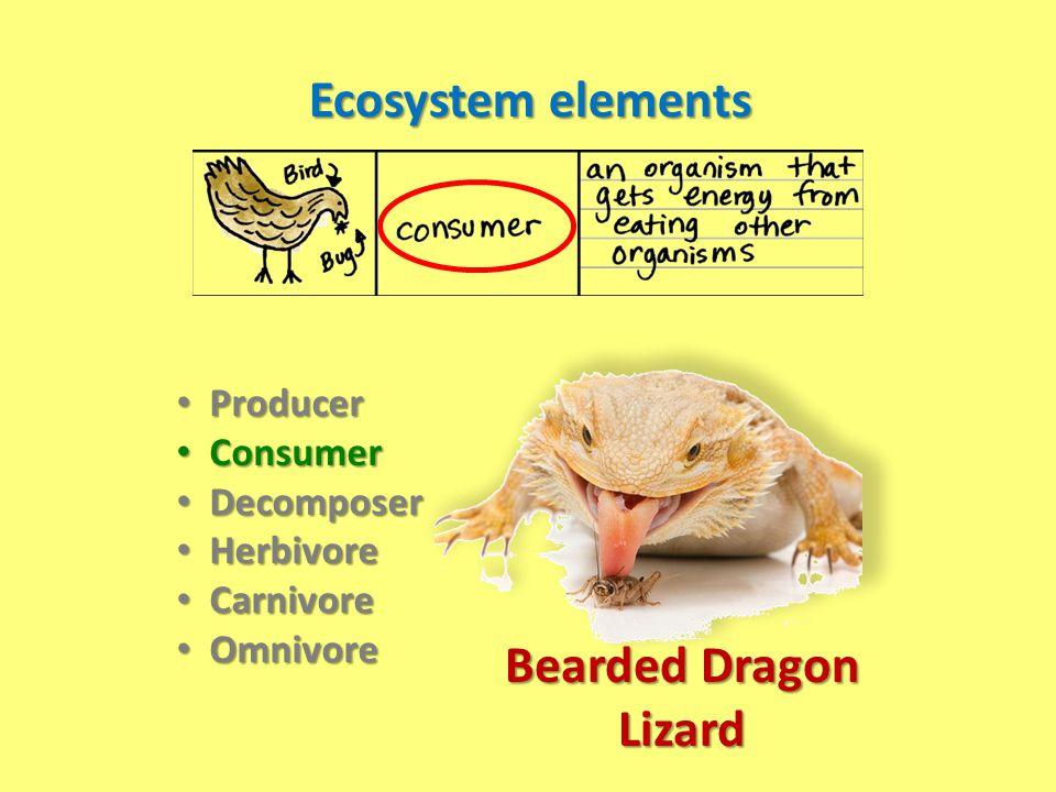 Ecosystem elements Bearded Dragon Lizard