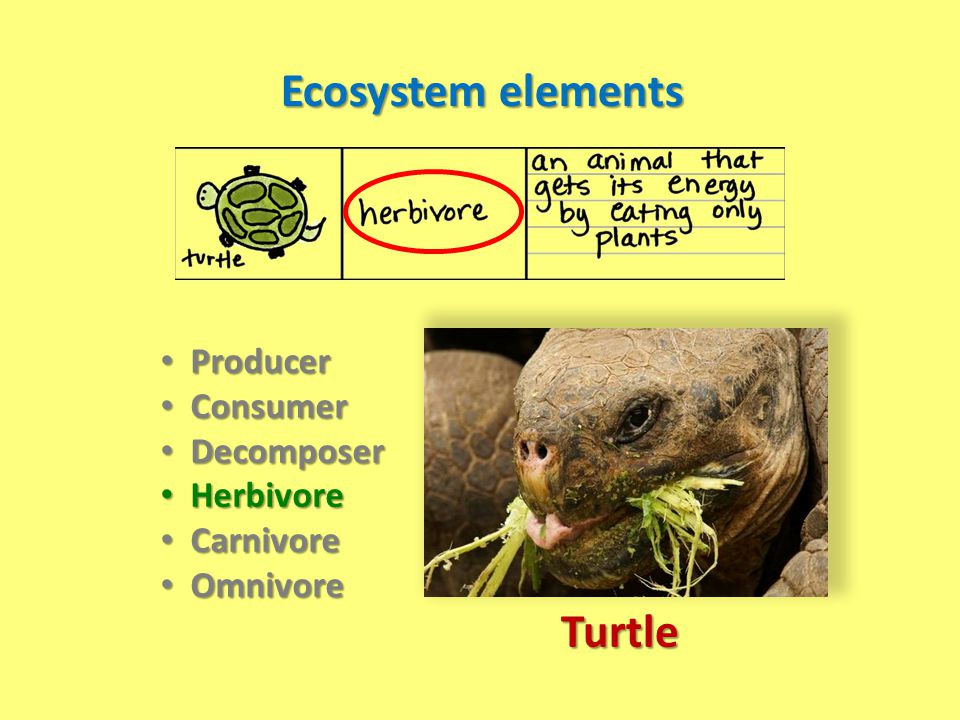 Ecosystem elements Turtle