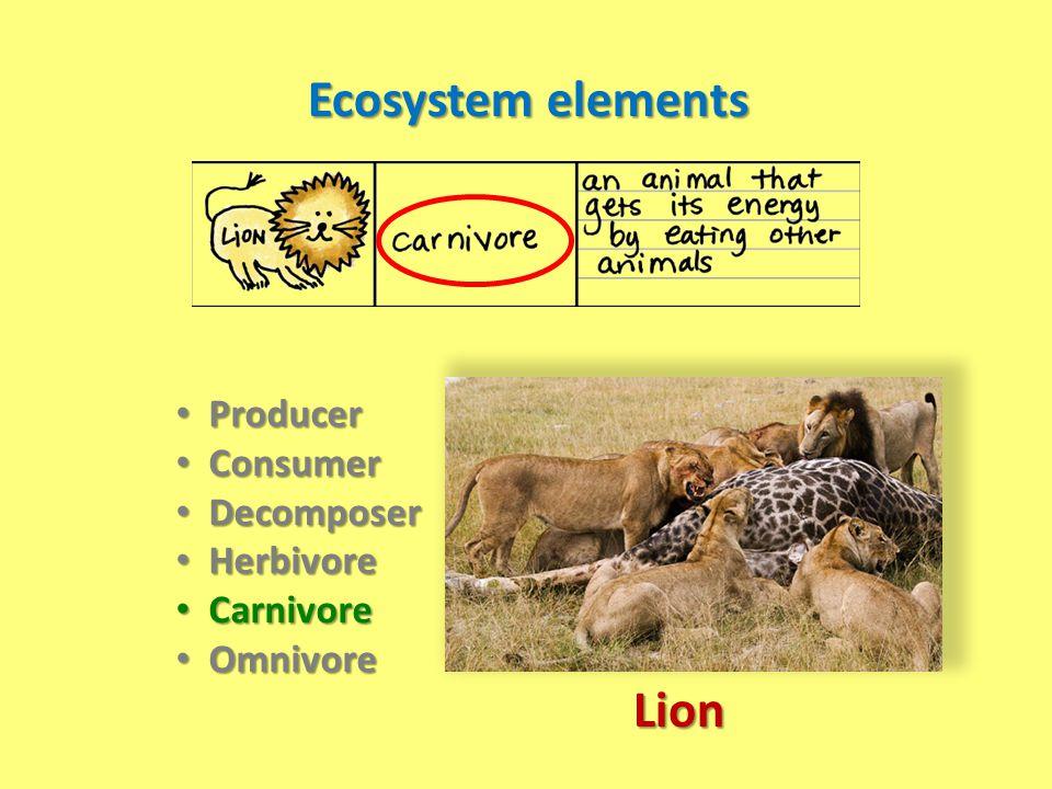 Ecosystem elements Lion
