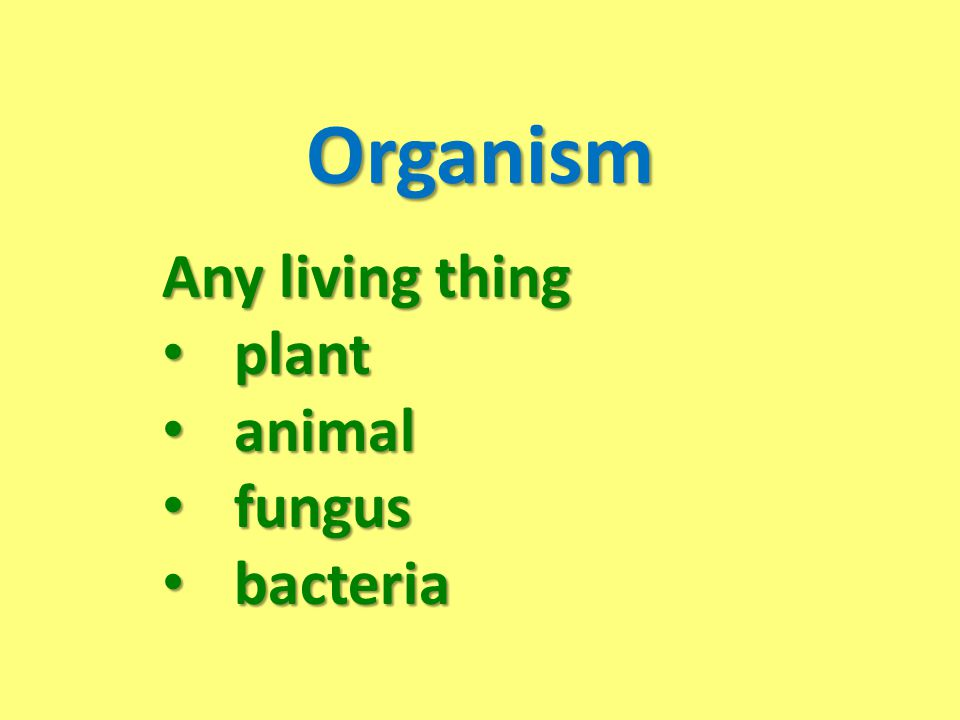Organism Any living thing plant animal fungus bacteria