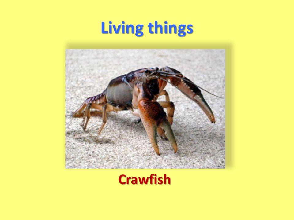 Living things Crawfish