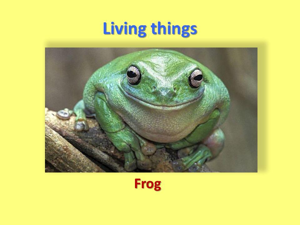 Living things Frog