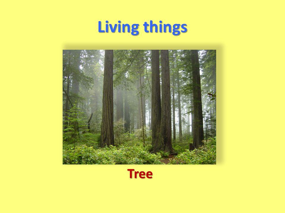 Living things Tree