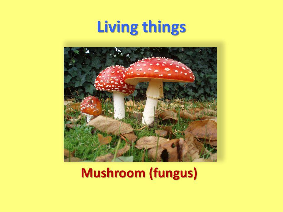 Living things Mushroom (fungus)