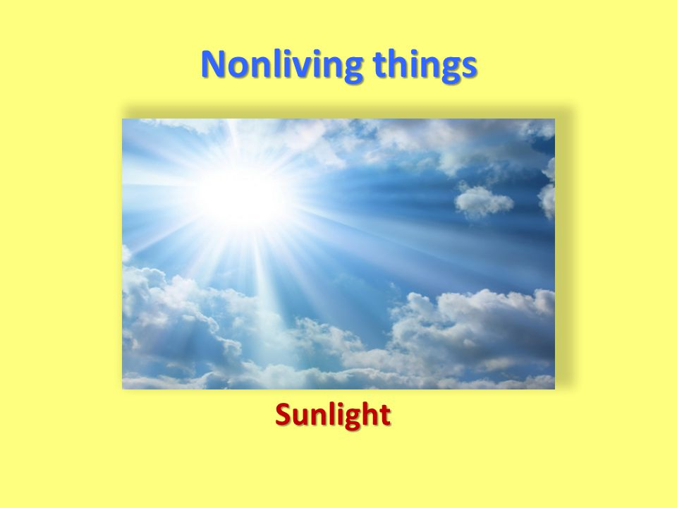 Nonliving things Sunlight