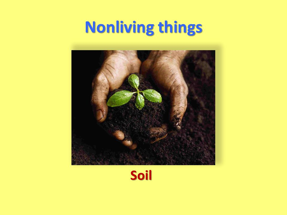 Nonliving things Soil
