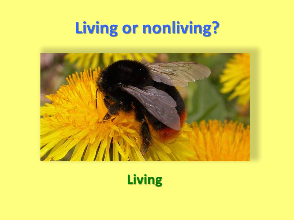 Living or nonliving Living