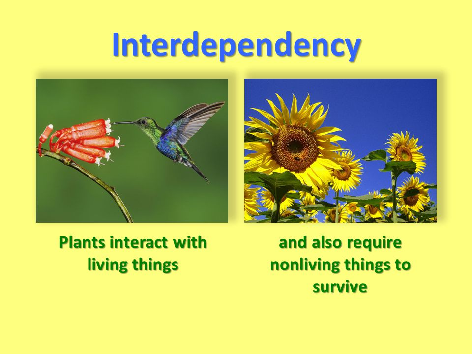 Interdependency Plants interact with living things