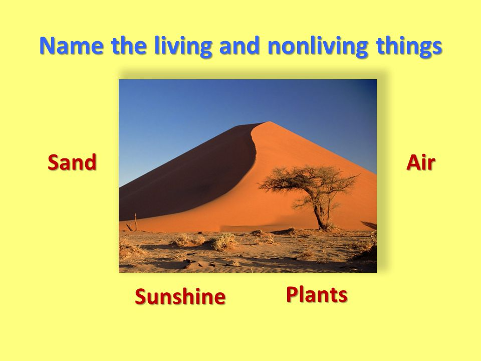 Name the living and nonliving things