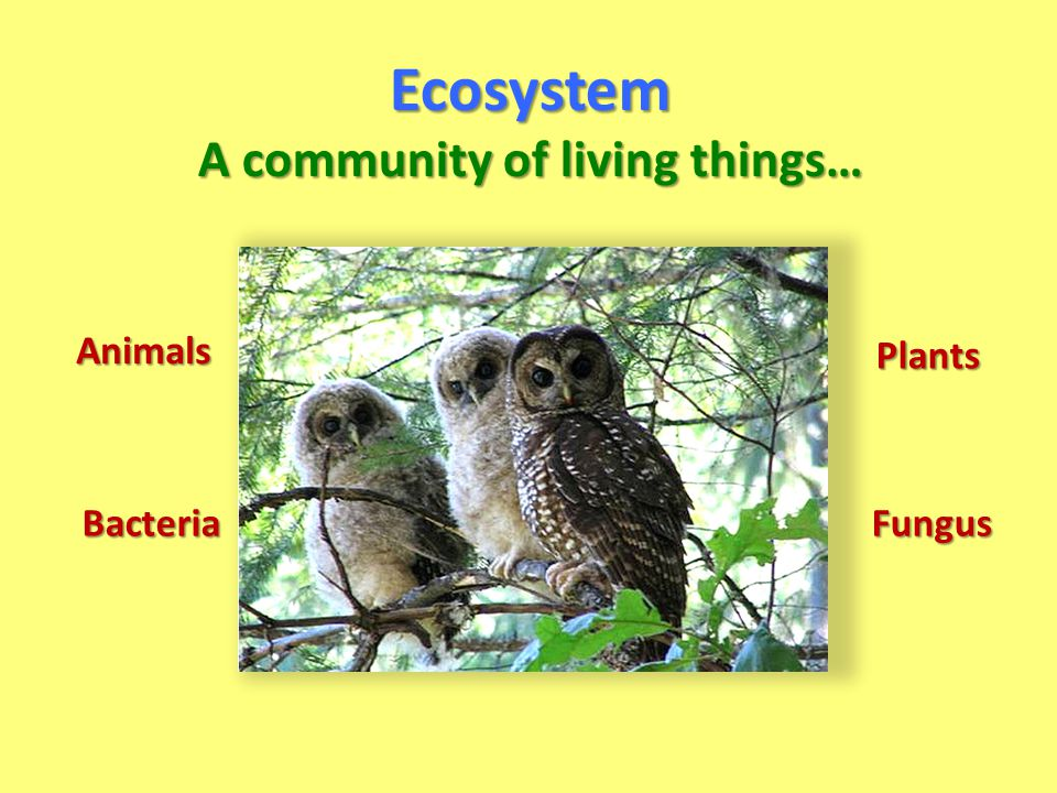 A community of living things…