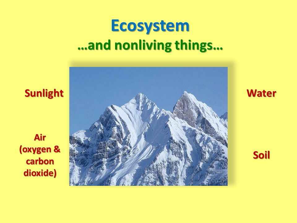 …and nonliving things… (oxygen & carbon dioxide)