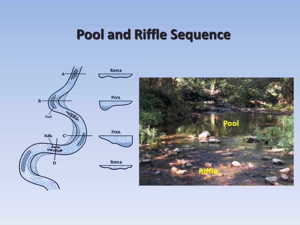 Stream geomorphology leslie a morrissey uvm july 25 ppt for Pool show near me