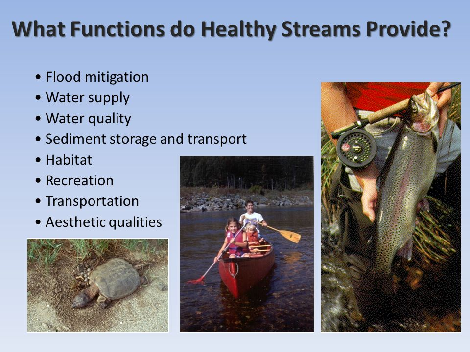 What Functions do Healthy Streams Provide