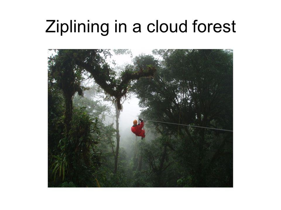 Ziplining in a cloud forest