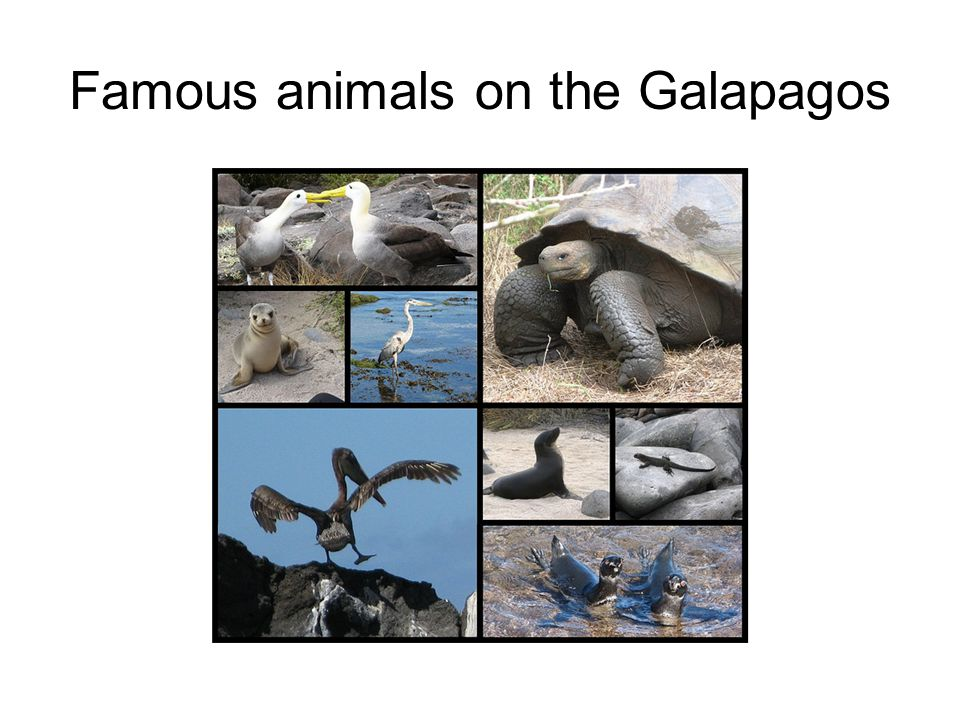 Famous animals on the Galapagos